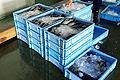 魚介類の保管・運搬に適したトロ函