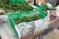 野菜に新鮮な空気を届ける全面メッシュの専用容器
